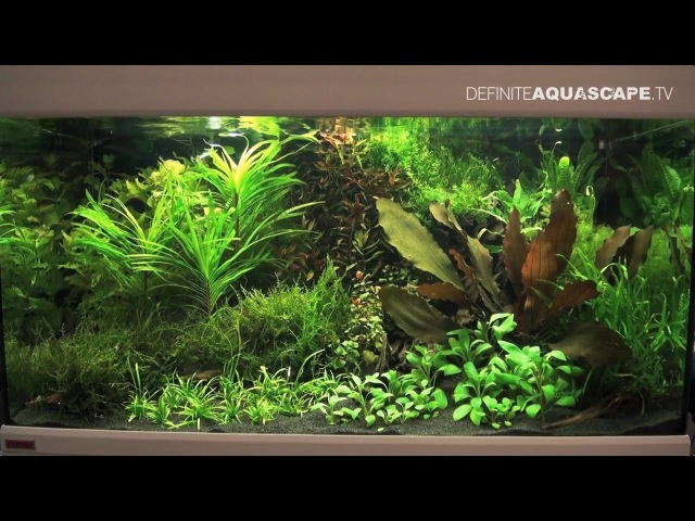 Planted aquariums of Heimtiermesse 2015, Hannover - part 11