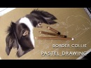 Cute Border Collie Pastel Drawing Painting