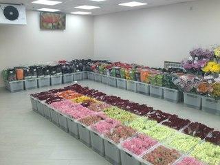 Клумба цветы казань цены