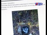Ситуация с похороненным в парке филином вызвала большой резонанс в социальных сетях.