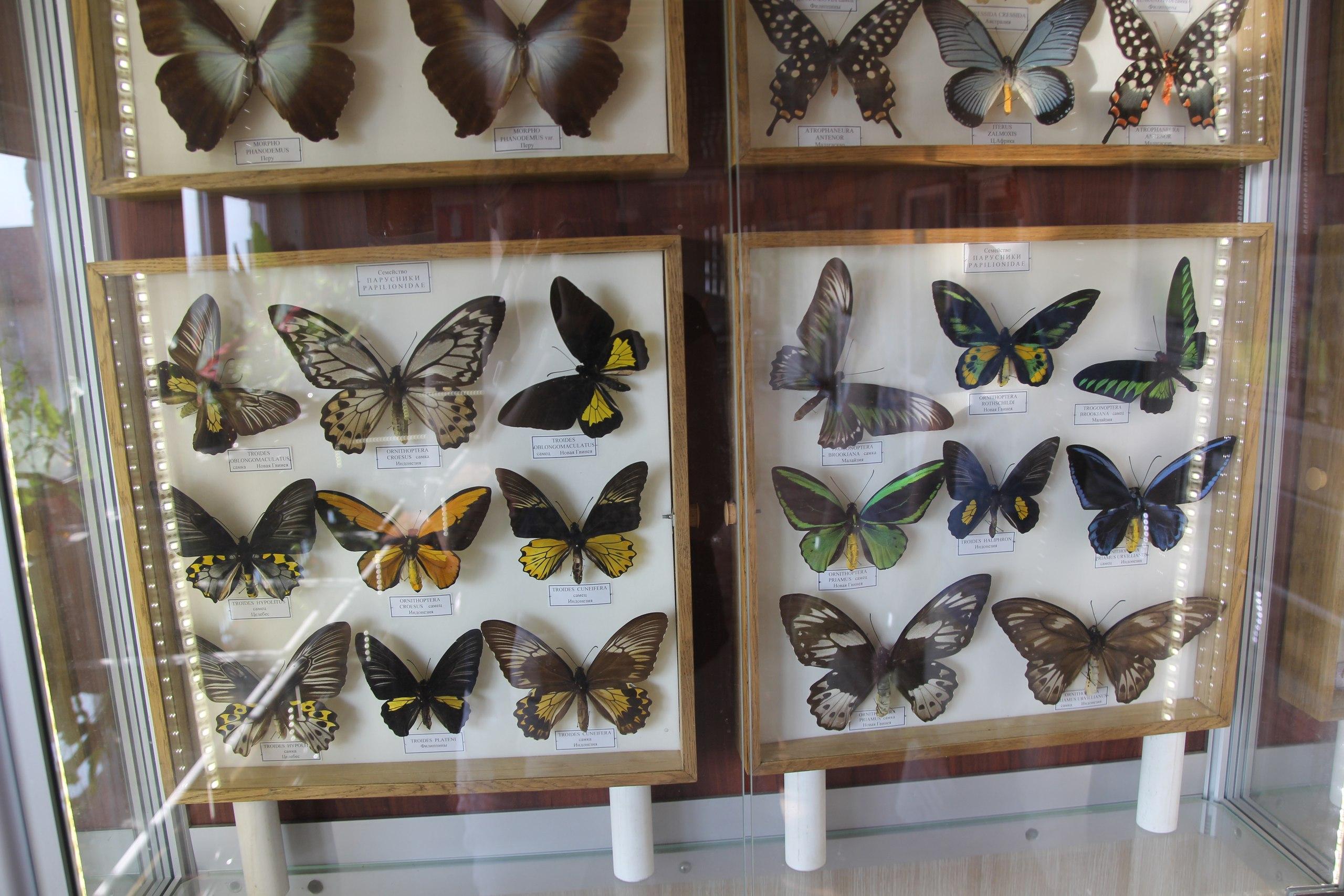 Флудилка: Бабочки парка птиц Воробьи