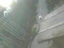 500900-Видео Очень серый кот