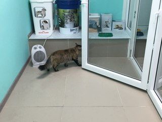 Гостиницы для кошек иркутск