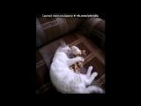 С моей стены под музыку Детские песни - про кота!=)) vkhp.net - Песня СУПЕРРР смешная!!!!. Picrolla