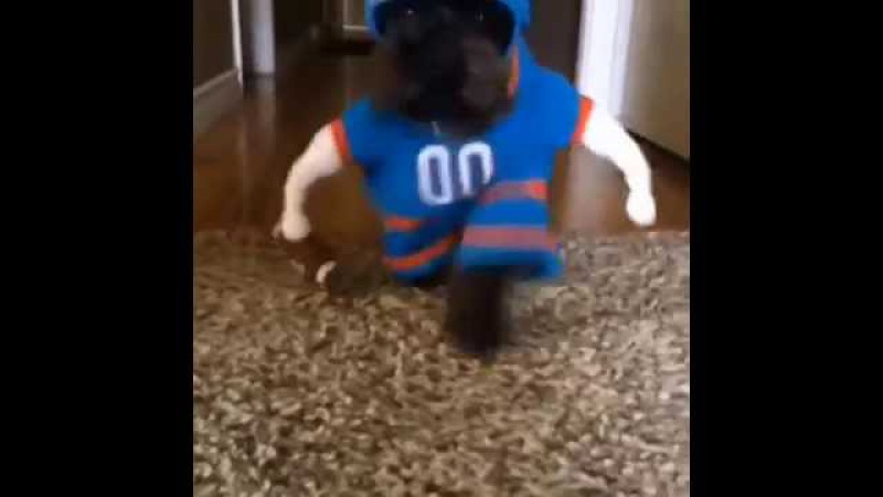 Football Dog Goes For A Touchdown!