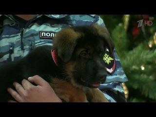 Российские полицейские передали своим французским коллегам щенка Добрыню - Первый канал