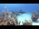 подводный мир океанов Underwater World Oceans