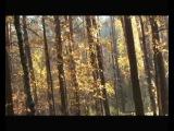 Осень музыканта, поет Жанна Бичевская