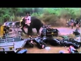 Indian elephant goes on the rampage during holy festival smashing vehicles in its path