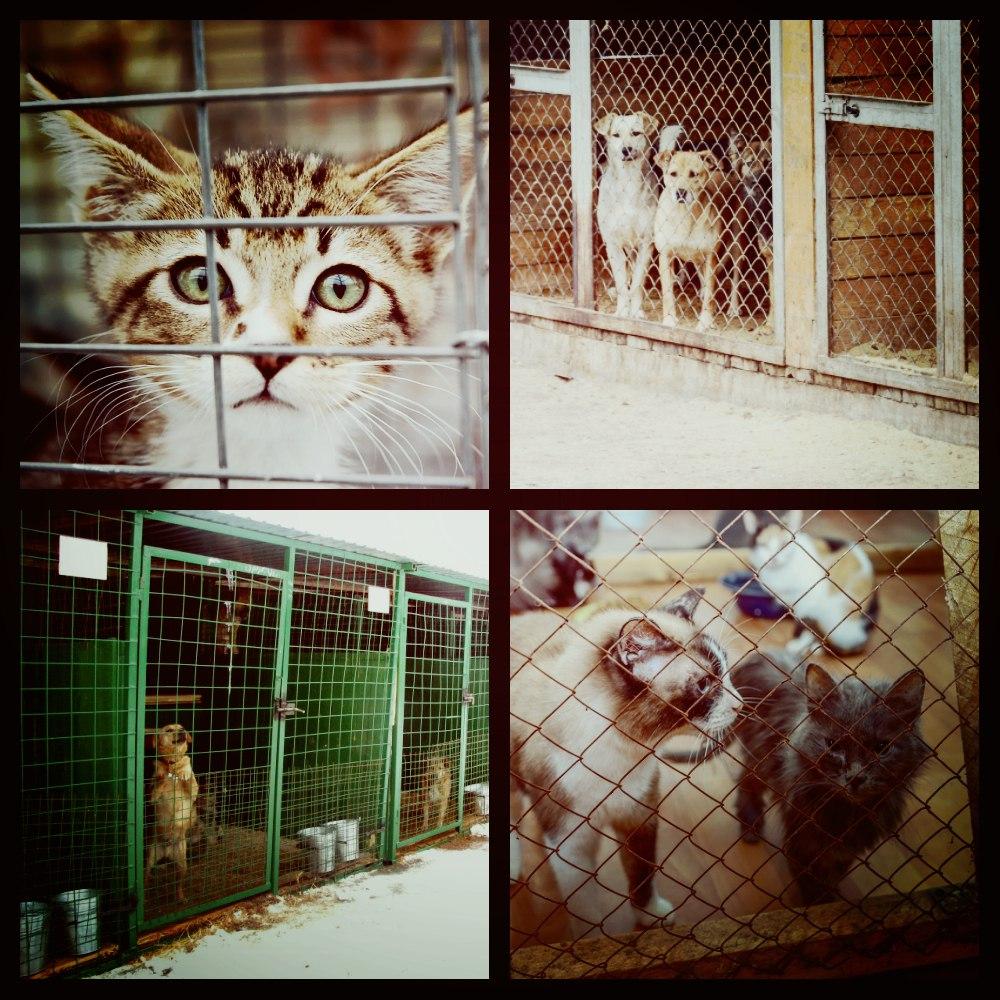 Приют для бездомных животных Ljxtic3FqVw