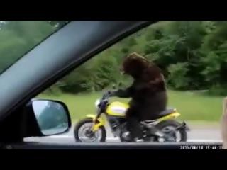 Прикол: медведь на мотоцикле едет по трассе