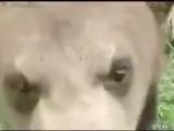 СМЕШНО ДО СЛЕЗ Про животных - YouTube