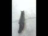 Макс из Кухни превратился в кота и бежит от Вики