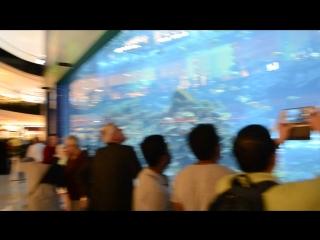Самый большой в мире аквариум рядом самый большой магазин сладостей