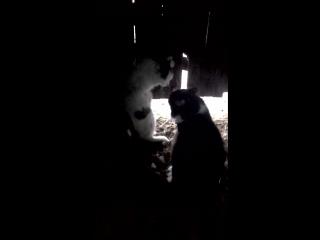 Мой кот Мишка защищает дом от врагов:-)