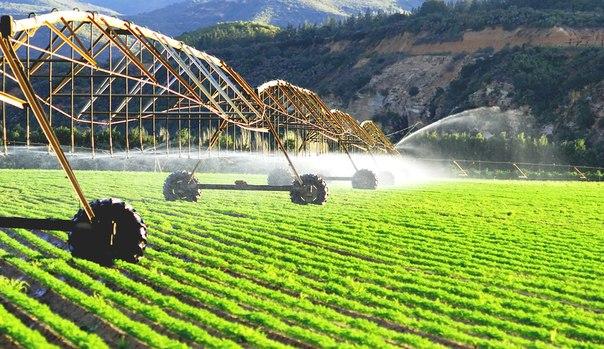 Роботы заменят фермеров в Японии