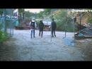 Breathe Carolina Ft Angelika Vee - RUINS (Official Music Video)