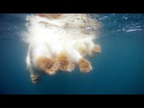 GoPro Polar Bears - The Quest for Sea Ice