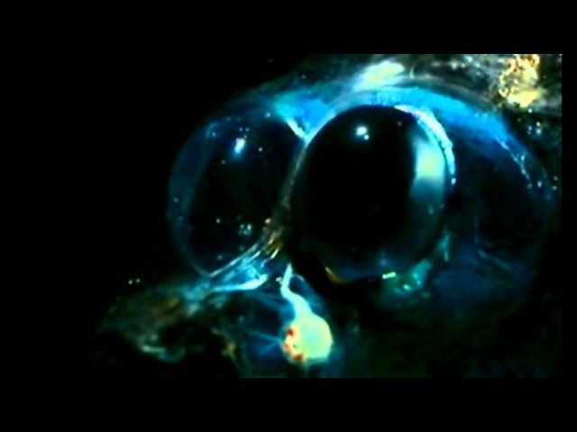 Stive Morgan - My Universe