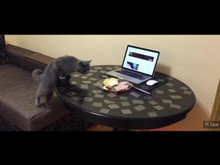 Как отучить кота залезать на стол. Готовь скотч!