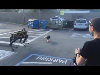 Собака отгоняет робота Boston Dynamics