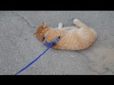 Кот притворяется мертвым