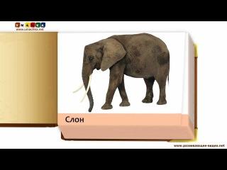 Учим названия животных - Презентации для малышей Обитатели саванны по Доману