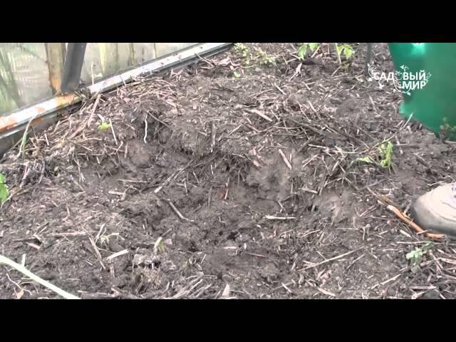 Как посадить переросшую рассаду. Сайт Садовый мир