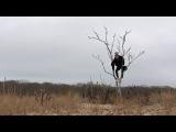 Penguin Prison - Show Me The Way (Official Music Video)