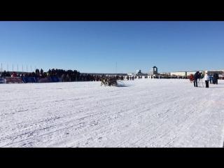 День оленевода 2016 Гонки на олених упряжках
