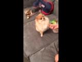 Собачки Ольги Бузовой в Перископе (04.12.2015)