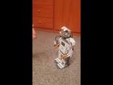 Робот Чаппи