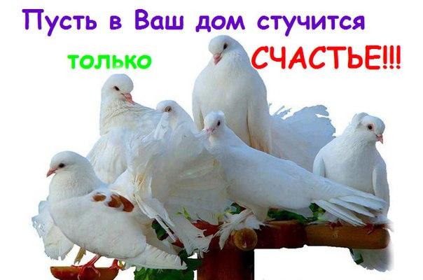http://cs629316.vk.me/v629316665/1ae4/uK82iUGzre8.jpg