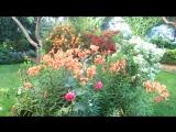 3. Летний сад 2015.