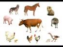 Английский детям. Учим название домашних животных и птиц на английском. Domestic animals and birds.
