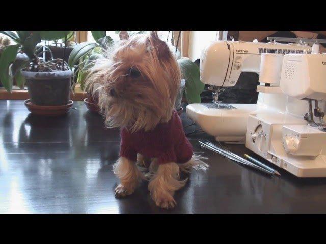 Как связать свитер для собаки своими руками.Одежда для собак на каналеДела дома...