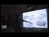 Эволюция мозга человека: от австралопитеков к сапиенсам