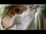 «Учимся спать» под музыку песня про моего кота - СЁМУ - Котик мой . Picrolla