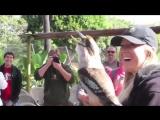Кукабара - очень прикольная птица
