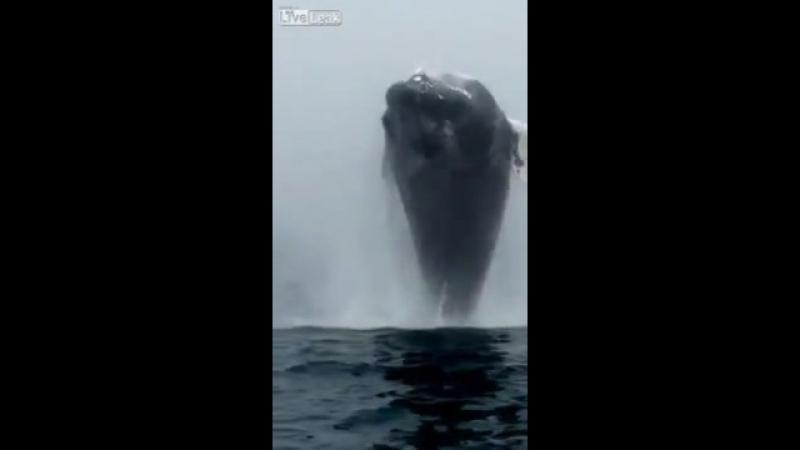 Вот это кит)