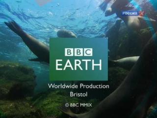 BBC: Чарльз Дарвин и Древо жизни