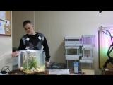 Запуск нано аквариума 40 литров с Дмитрием Кашкаровым...