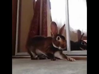 кролк