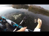 Northern Pike SLAMS the Lure right NEXT to the Kayak!