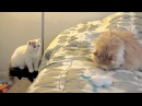 Kitten Excited to say Hi to new Friend