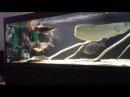 Интерактивный аквариумный туризм Сезон 2 Выпуск 1 Настоящие монстры