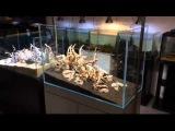 АКВАСЕЙП Запуск двух растительных аквариумов