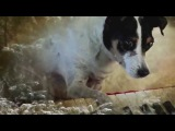 Laurie Anderson - Heart of a Dog Official Trailer