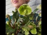 Вдохновляемся новой красотой!!! Ведь у нас новое поступление цветов!!!!