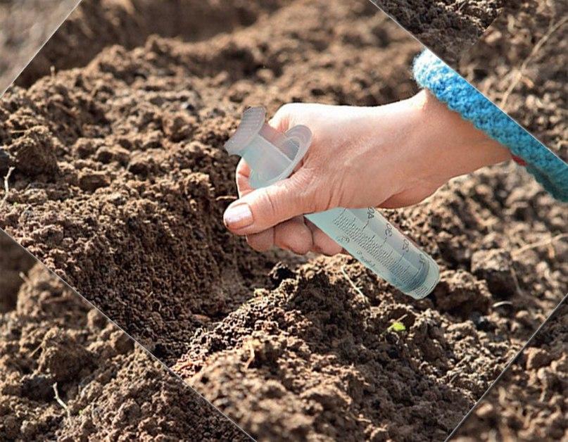 Способы посадки мелких семян-семена из шприца